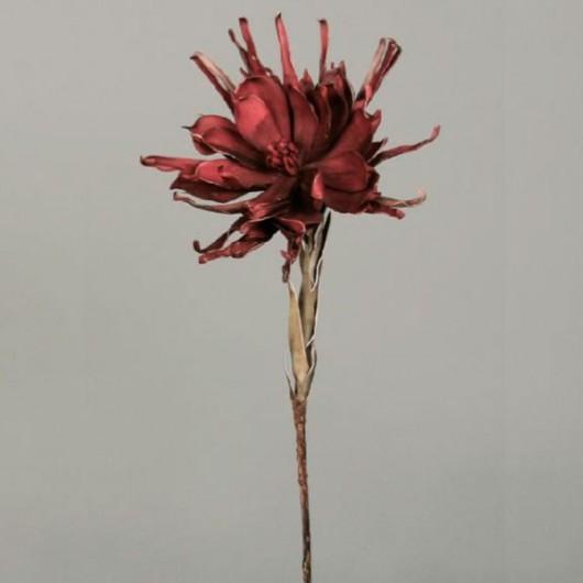 Vara crisantemo rojo