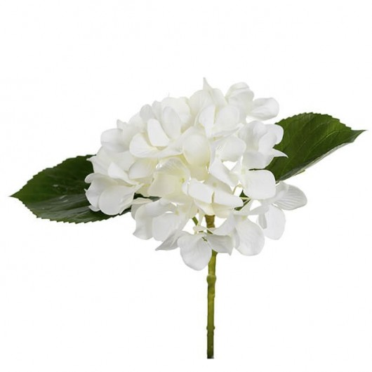 Hortensia blanca, rabo...